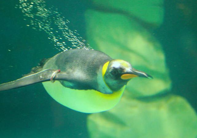 penguin encounter dubai aquarium & underwater zoo