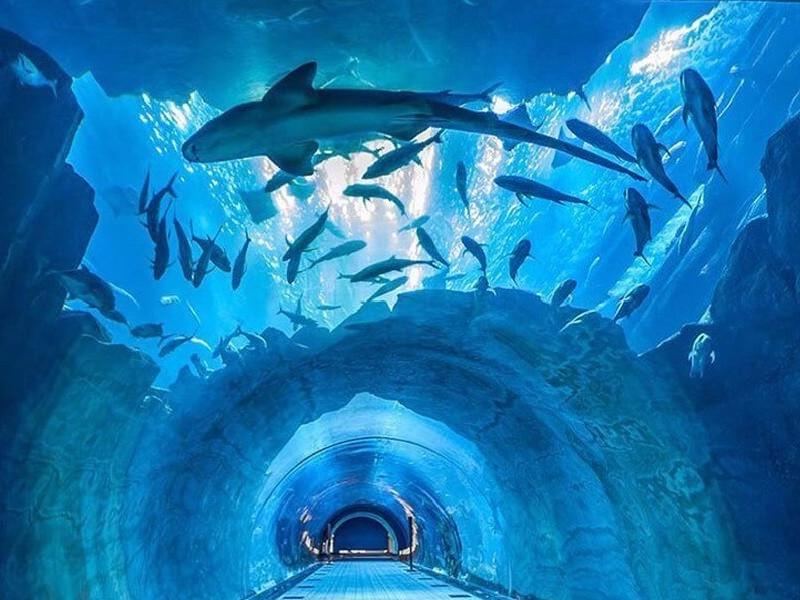 vip explorer experience dubai aquarium & underwater zoo