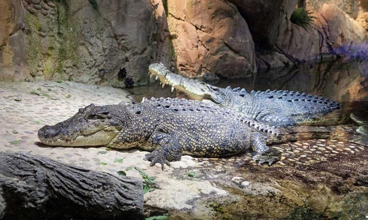 king croc dubai aquarium & underwater zoo