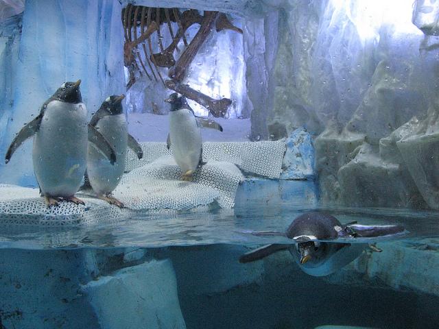 dubai aquarium & underwater zoo penguin cove