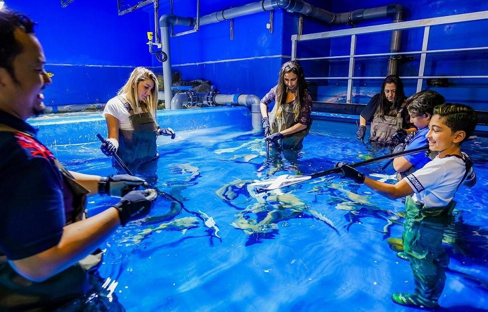 ray encounter dubai aquarium & underwater zoo