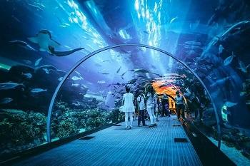 dubai aquarium images