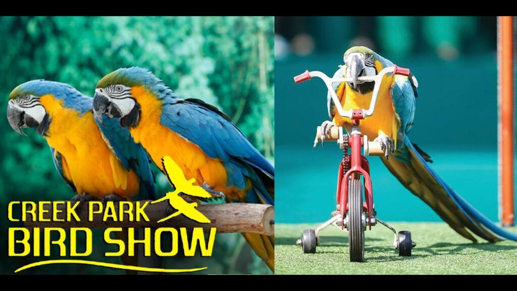 CREEK PARK EXOTIC BIRD SHOW IN DUBAI DOLPHINARIUM