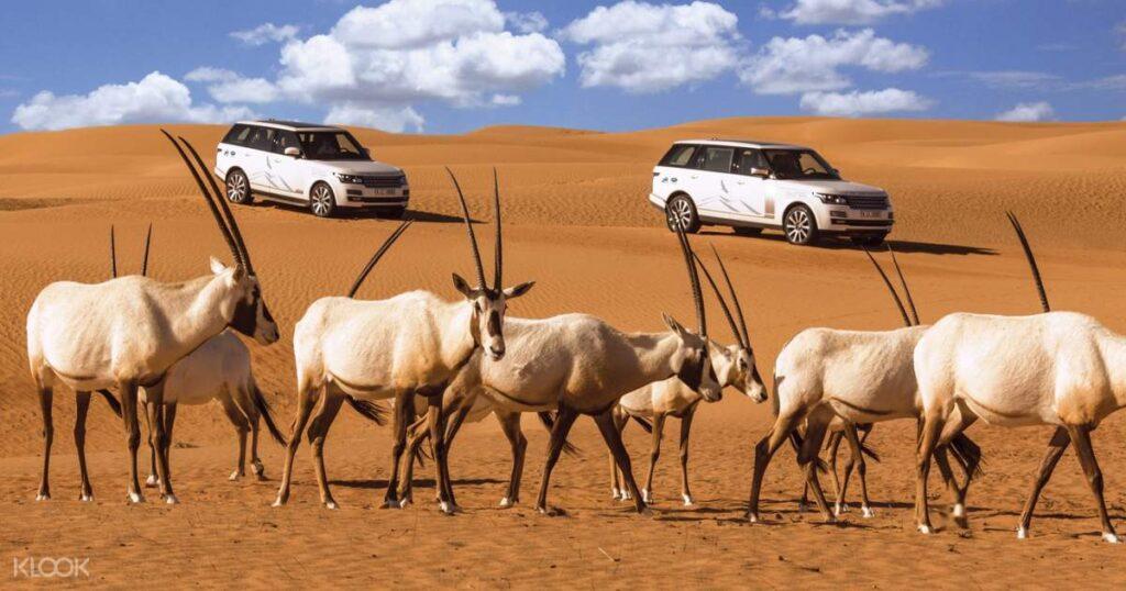 Dubai Desert Conservation Reserve Adventure