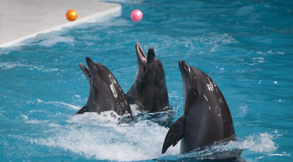 Seal show Dubai Dolphinarium