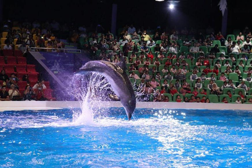 dubai dolphinarium complete guide