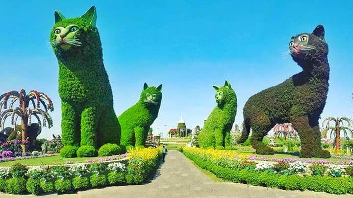 dubai miracle garden cat